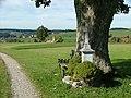 Ahornstamm - panoramio.jpg