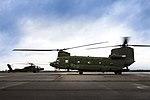 Airbase Papa Saker Falcon.jpg