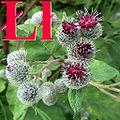 Alfabet roślin - literka Ł.jpg
