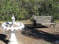 Alum Rock, San Jose, CA, USA - panoramio (14).jpg