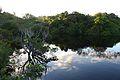 Amanhecer no Amazonas II.jpg