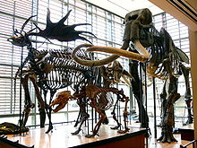 Amherst College Museum of Natural History.jpg