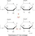 Amylase hydrolysisl 1-4.png
