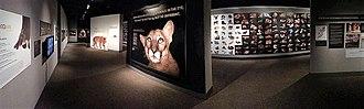 University of Nebraska State Museum - Animal Evolution Display