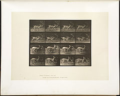 Animal locomotion. Plate 684 (Boston Public Library).jpg