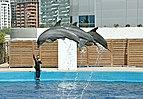 Animales del l'oceanografico-valencia-2009 (4).JPG