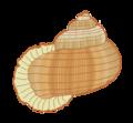 Annularia-pulchra-illustration.png
