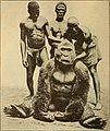 Anthropogenie; oder, Entwickelungs-geschichte des Menschen (1910) (19343313056).jpg