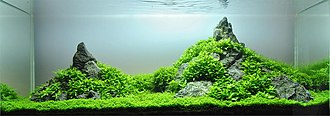 Aquascaping - Iwagumi style aquascape, with the Oyaishi stone at the right