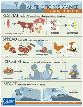 Antimicrobial resistance - All animals carry bacteria in their intestines. Antibiotics are given to animals. Antibiotics kill most bacteria. But resistant bacteria survive and multiply.