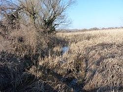 Aranyhegyi Stream near Solymár.JPG