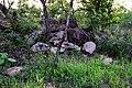 Arbres entre roches dans le pâturage naturel de Samiondji (Covè).jpg