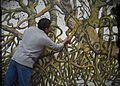 Artista Marco Martinez Espinoza pintando.jpg