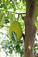 Artocarpus heterophyllus - Photo (c) Prenn,  זכויות יוצרים חלקיות (CC BY-SA)