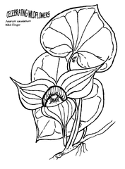 Image Result For National Park Coloring