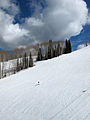 Aspen Mountain trees.jpg