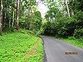 Athirapally Forest - panoramio (2).jpg