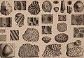 Atti della Società toscana di scienze naturali, residente in Pisa (1879) (20348731305).jpg