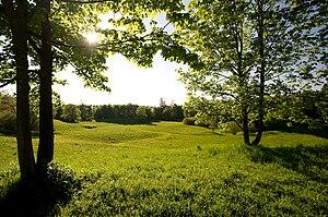 Aubing-Lochhausen-Langwied - Aubinger Lohe forest