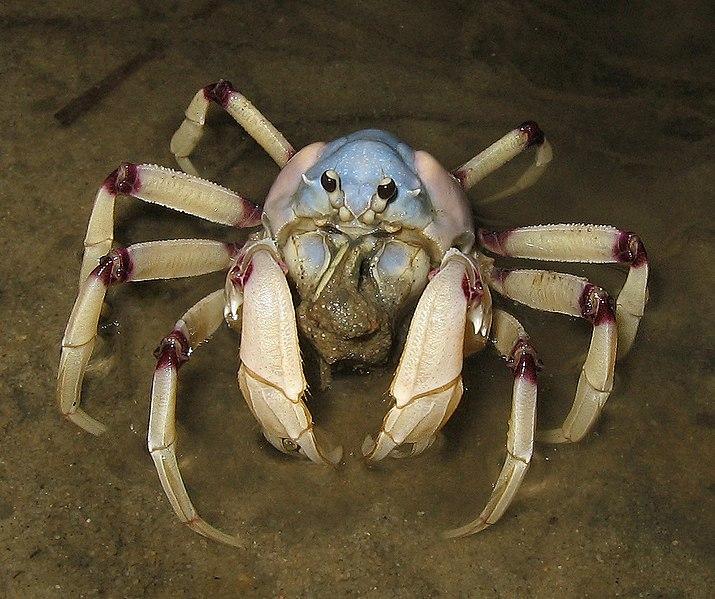 715px-Aus_soldier_Crab.jpg