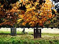 Autumn, Bushy Park. - panoramio (1).jpg