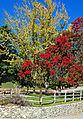 Autumn, Oak Glen, CA 11-7-15 (22486249359).jpg