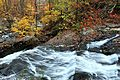 Autumn-stream-falls-hdr - Virginia - ForestWander.jpg