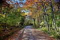 Autumn-trees-country-road-fence - ForestWander.jpg