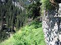 Bärenburg Westmauer.jpg
