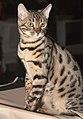 BEN Russicats Lodestar Cameron Diaz (5628210428) (cropped).jpg