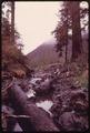 BUFFER STRIP IN OLYMPIC NATIONAL TIMBERLAND, WASHINGTON NEAR OLYMPIC NATIONAL PARK - NARA - 555153.tif