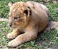 Baby Cub (411574241).jpg