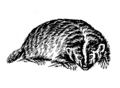 Badger (PSF).png