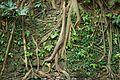 Bali 045 - Ubud - tree roots.jpg