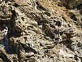 Banyuls rock1.JPG