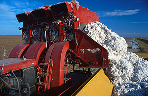 English: Cotton harvesting in Texas, USA; unlo...