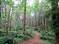 Bear Creek Nature Park.jpg