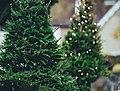 Beaulieu Christmas Trees (Unsplash).jpg