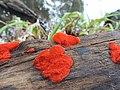 Beauty of Red Algae.jpg