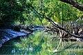 Beauty of Sundarban river03.jpg