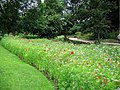 Bed of wild flowers at Harlow Carr Gardens - geograph.org.uk - 1430823.jpg