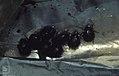 Beetles drowned in bag of water. Dos Mares (37708352256).jpg