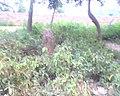 Bhangarh fort Alwar Rajasthan 03.jpg