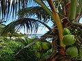Biosfera Sian Ka'an MEXICO - panoramio.jpg