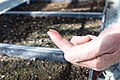 Biotech Sam Reid shows a seed sprout (48015958952).jpg