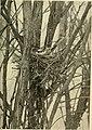 Bird lore (1907) (14753289144).jpg