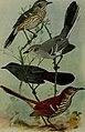 Bird lore (1916) (14753063294).jpg