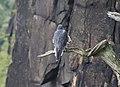 Bird on branch.jpg