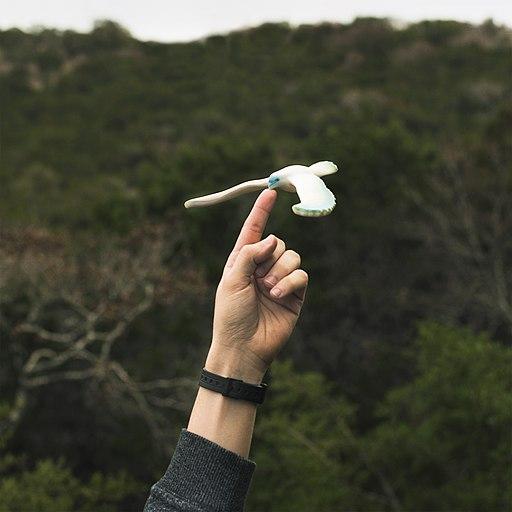 Bird toy showing center of gravity