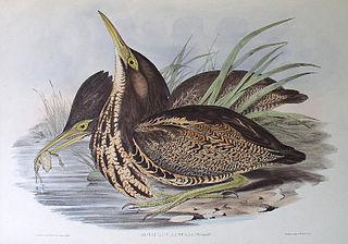 North Victorian Wetlands